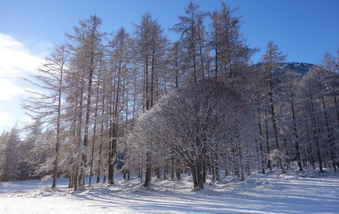 Weihnacht - Bild Lärchenwald