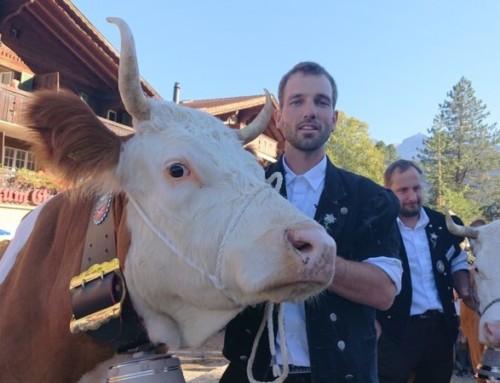 Berner Oberland – Tierische Miss-Wahl in der Lenk